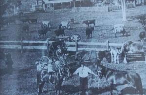 home_cart_horses-600