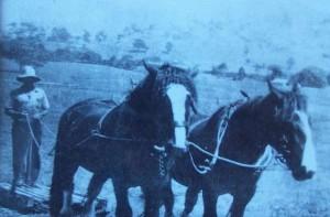 horse_slay-600